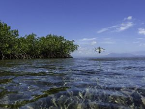 Jordan Mitchell pilots a quad copter drone over a Red Mangrove forest.
