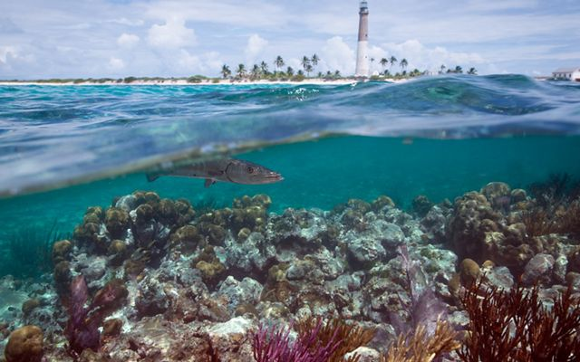 view of a fish and coral under the water near the coast