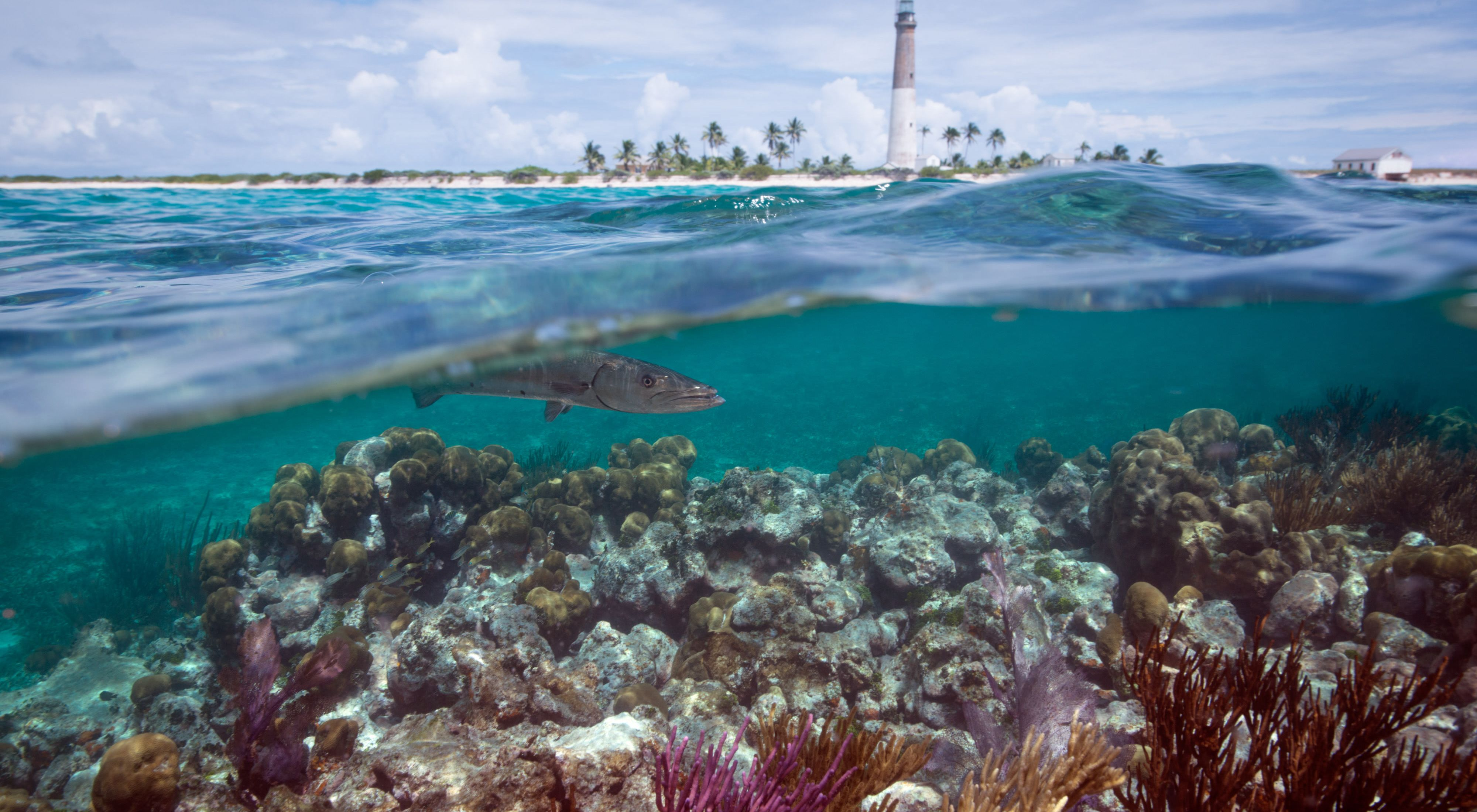 A fish swims over coral reefs with a lighthouse and palm trees visible on land.