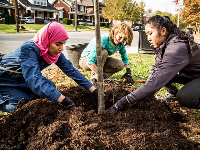 Volunteers plant trees in Louisville, Kentucky.