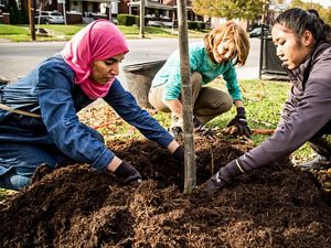 Volunteers planting trees in Louisville