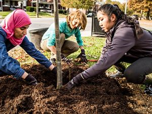 Three multi-cultural women plant a tree together.
