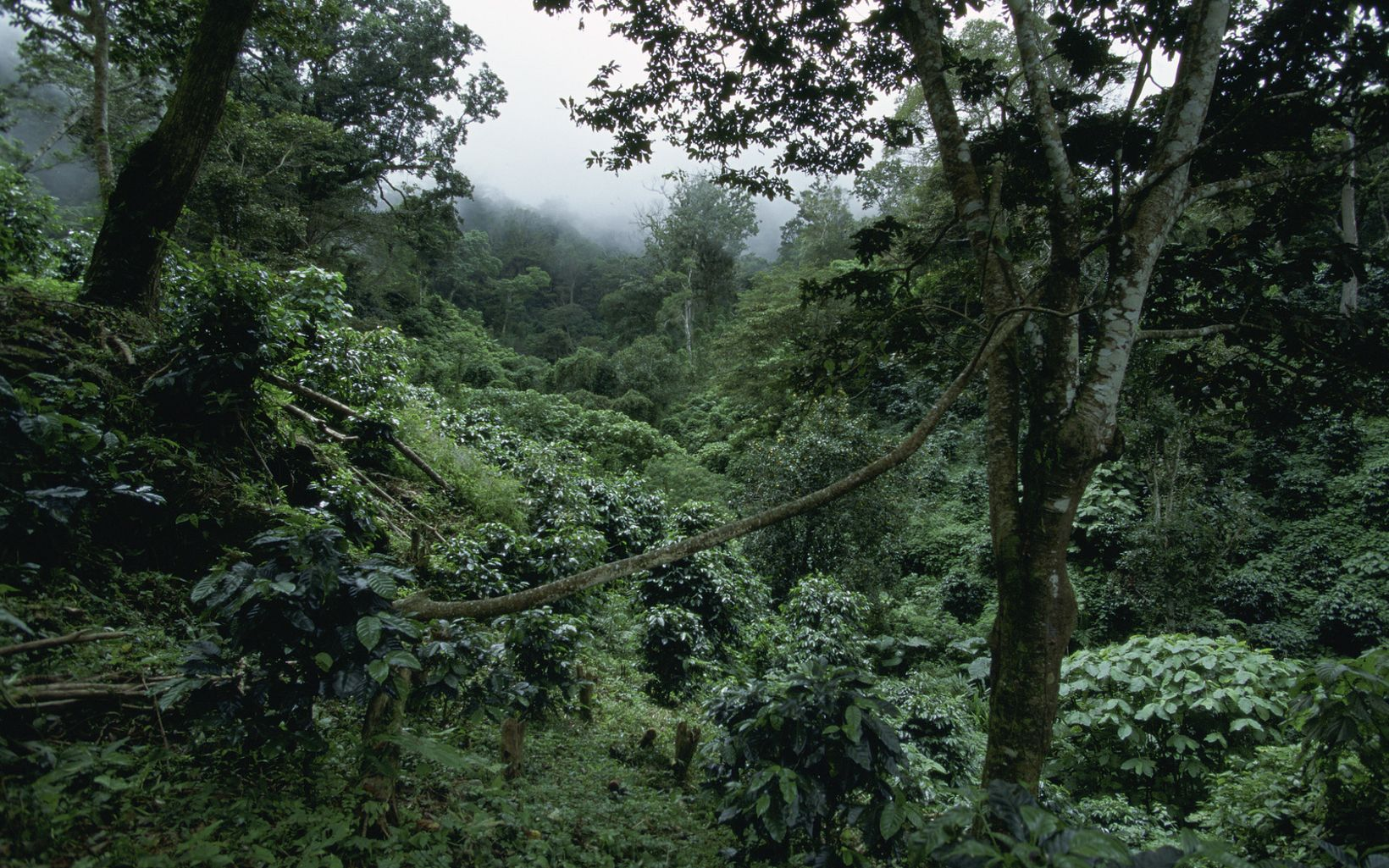 Clouds envelop the forest of the Sierra Madre watershed and Reserva de la Biosfera La Sepultura near Tres Picos and Pijijiapan; Chiapas, Mexico.