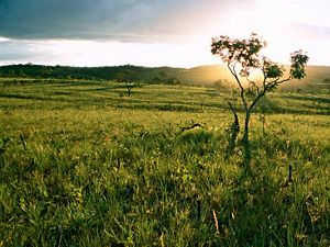 The Cerrado of Chapada dos Veadeiros National Park.