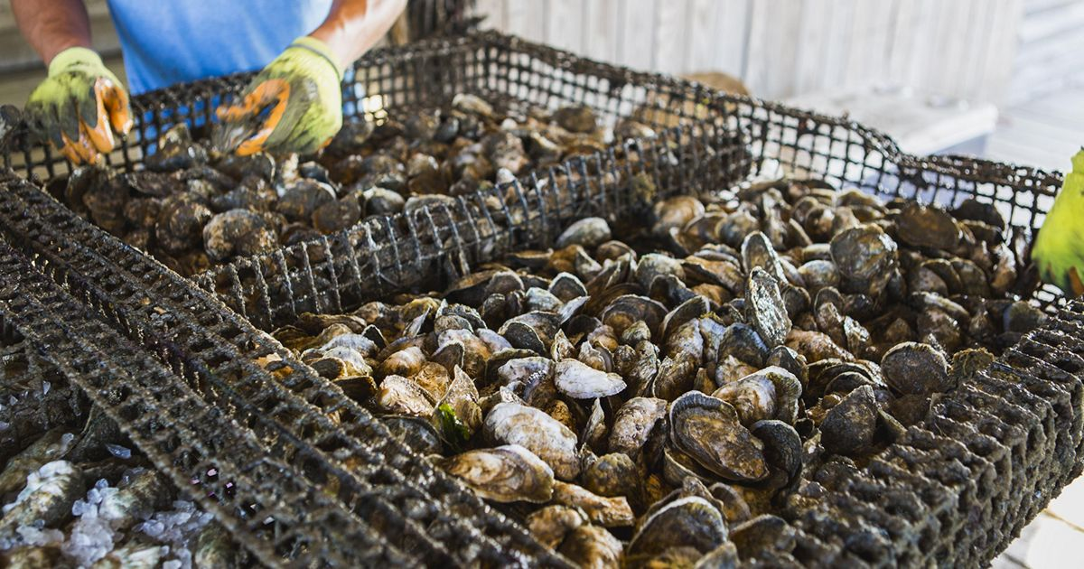 Young watermen are redefining the character and approach to working the Chesapeake Bay.
