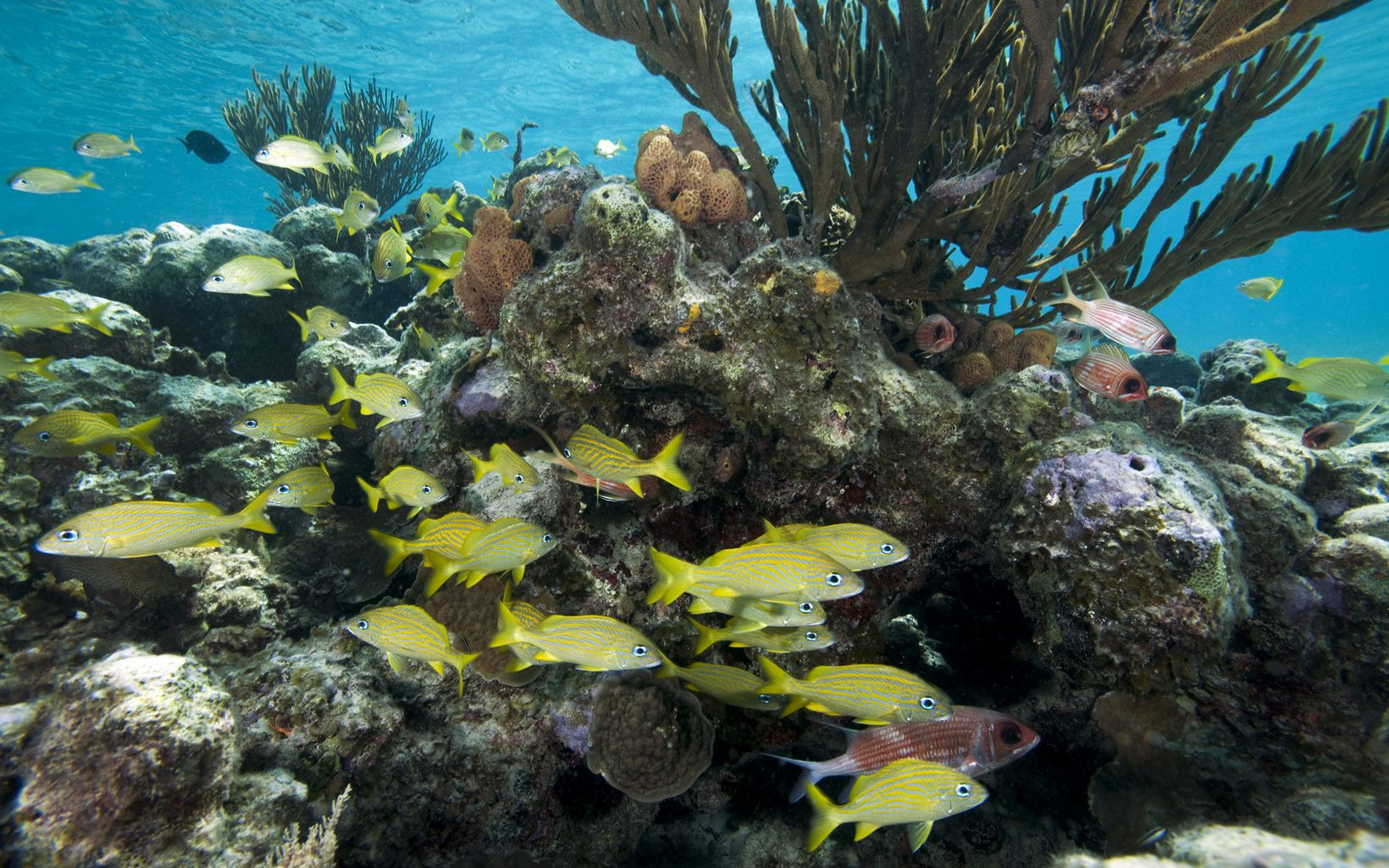 Fish swim through healthy reefs in the Exuma Cays.