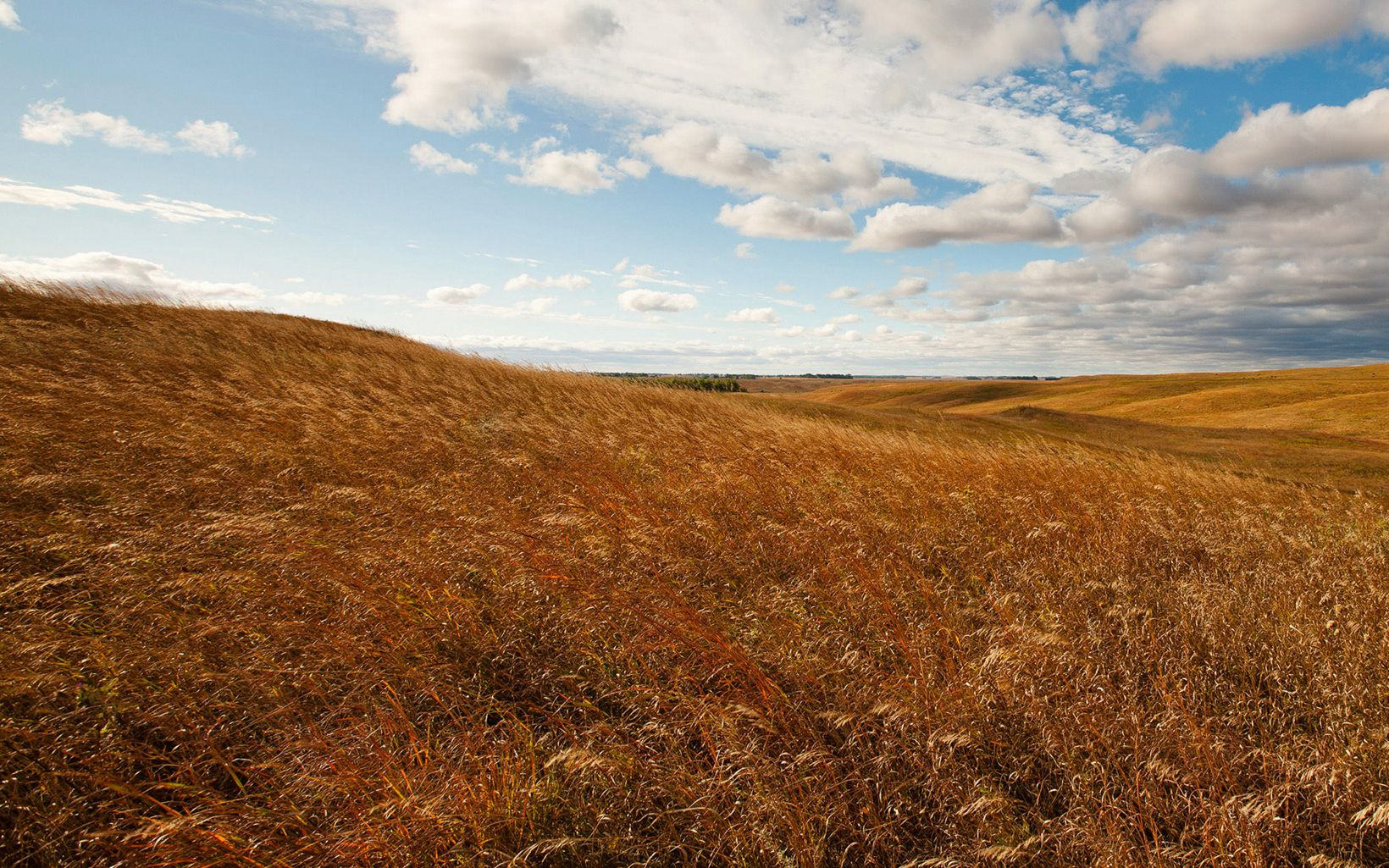 An open grassland pasture in fall with wind blowing in the grasses.