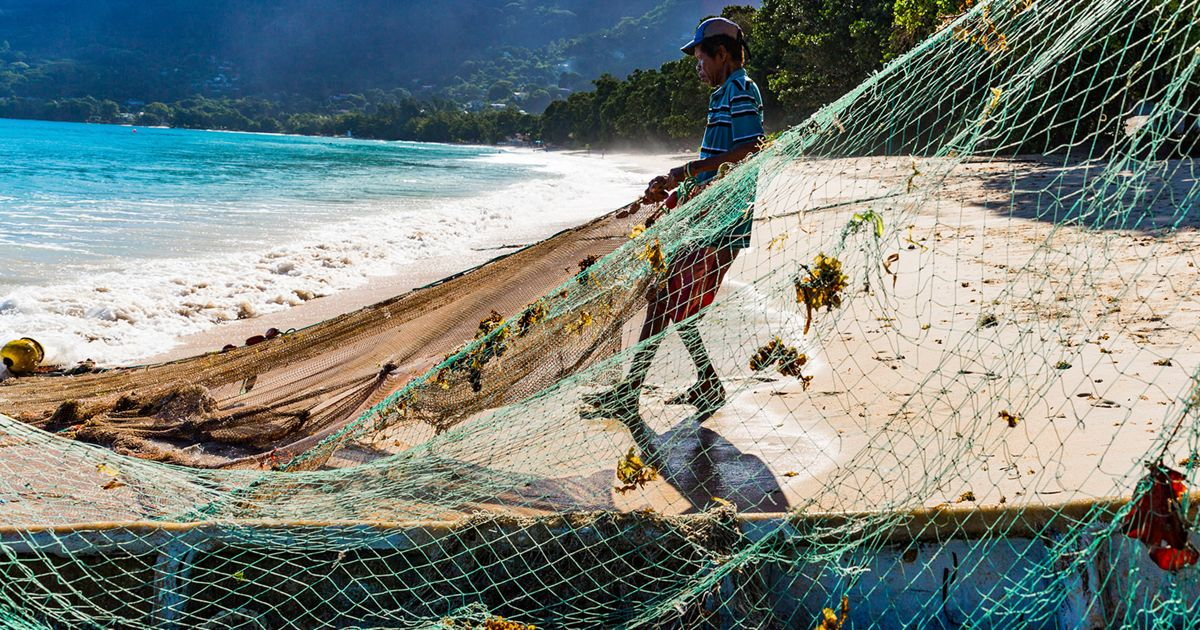 Mackrel fishermen in Seychelles fish along the shore with small boats and siene nets, trapping fish against the beach and hauling the catch up onto the sand. © Jason Houston