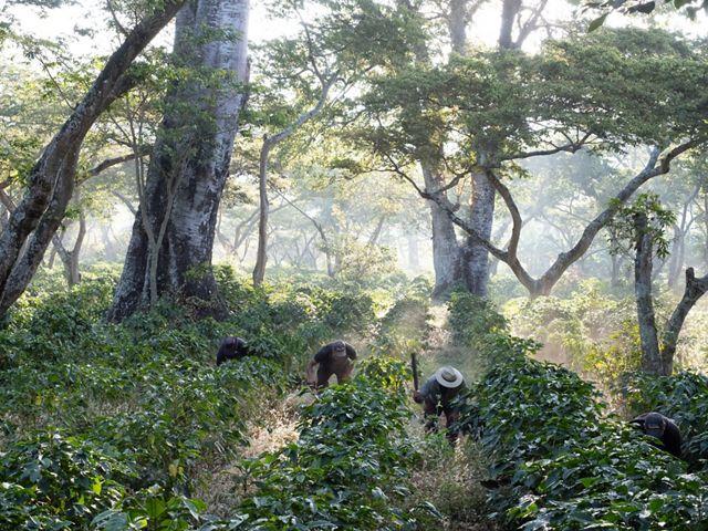 Agricultores limpian la maleza en un área boscosa