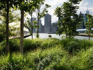 Brooklyn Bridge Park looking towards Manhattan.