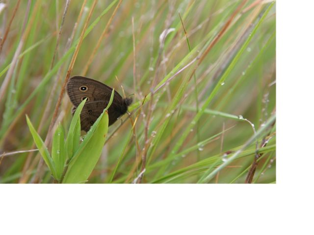 a dark moth in long green grass