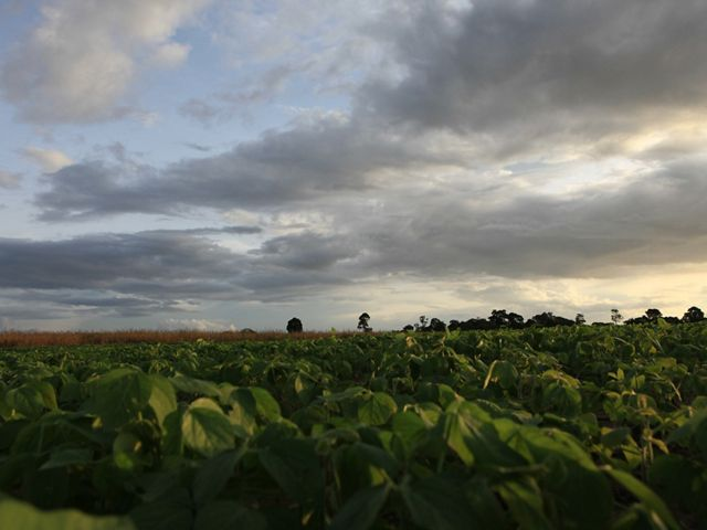 Soy fields in Brazil