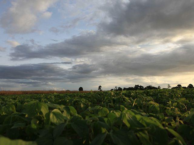 Soy fields in Brazil