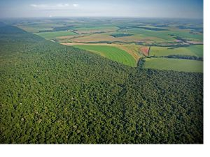 Aerial view of crop fields and farms along the forest border of Iguaçu National Park, Brazil. The park shares with Iguazu National Park in Argentina one of the world's largest and most impressive waterfalls, over 2,700 metres wide. The Park is an island of wilderness in the wide Paraná river valley, much of which has been deforested for agriculture. It shelters rare and endangered species of flora and fauna, such as the giant otter and giant ant-eater. Clouds of spray round the waterfall produce lush vegetation. have vastly deforested the area east of the city of Foz do Iguaçu in the state of Parana, Brazil.