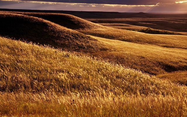 A photo of rolling grasslands in sunset.