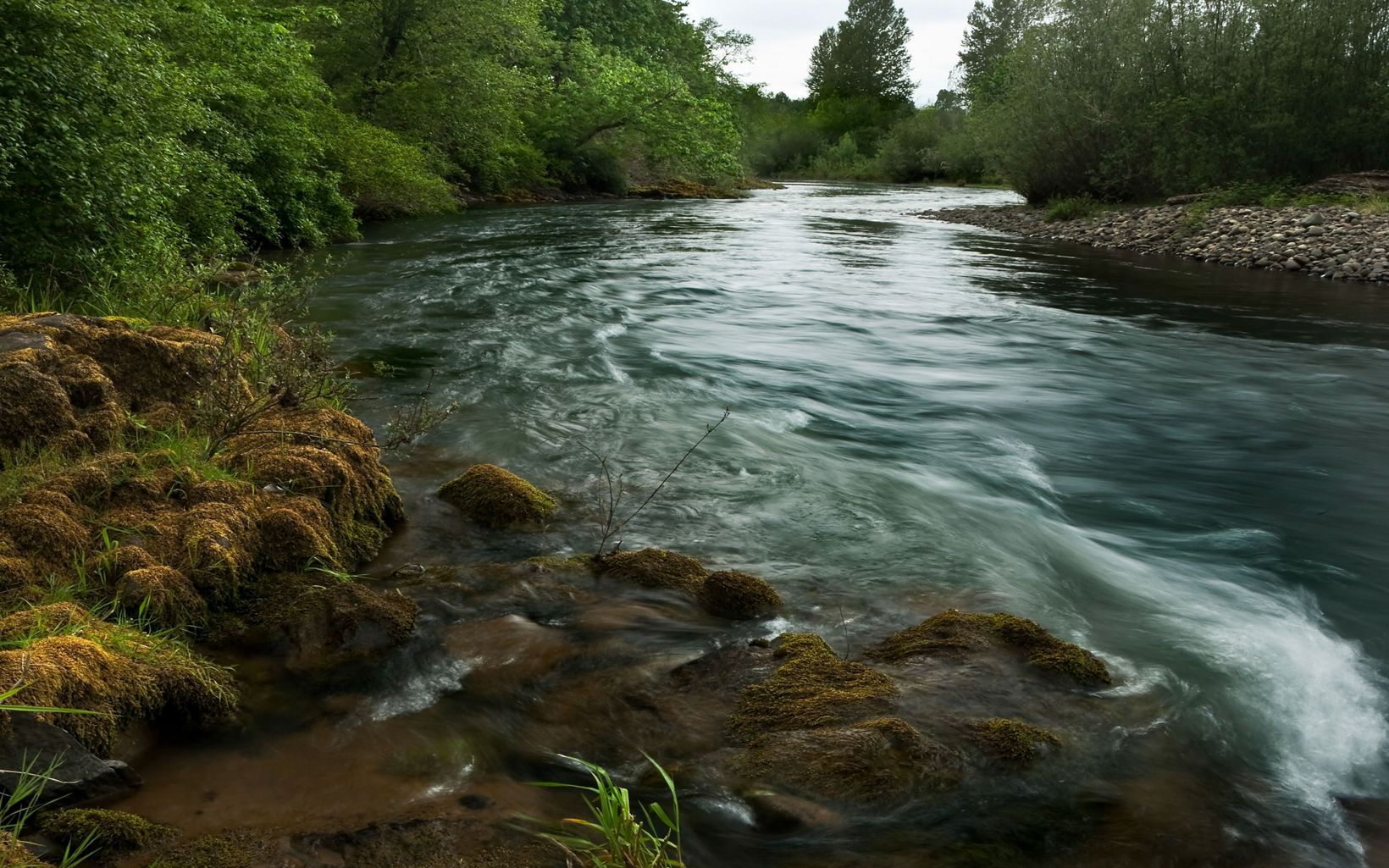 (LIMITED INTERNAL RIGHTS) At the confluence of the Middle and Coast Forks of Oregon's Willamette River, cool waters, thickwoodlands and vast wetlands represent a unique chance to preserve increasingly rare elements of the Willamette Valley's natural heritage. Photo credit: © Rick McEwan