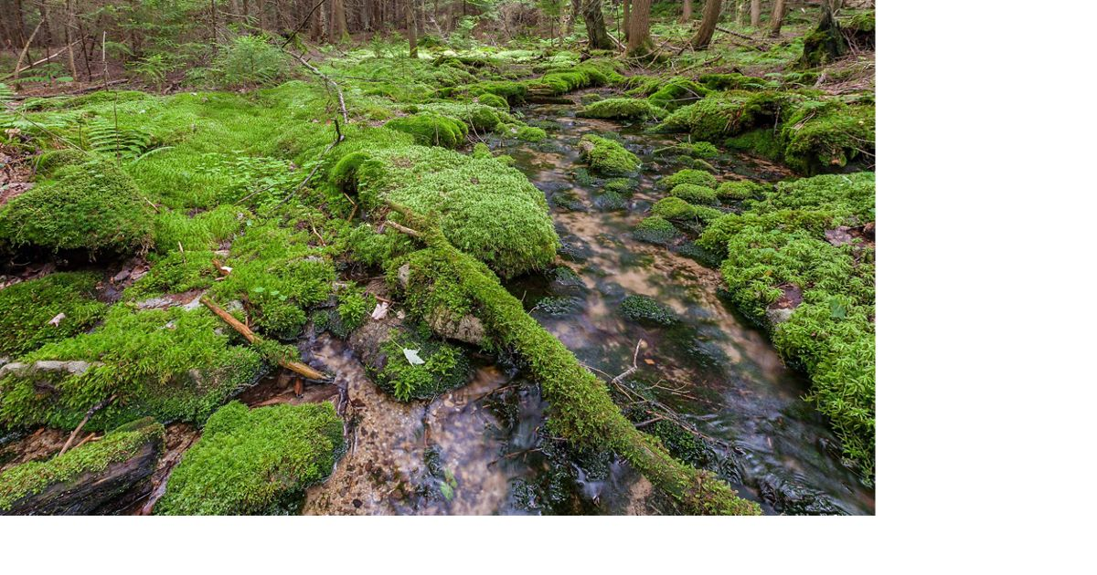 A stream in the Wooded Hemlock Bog in West Virginia.