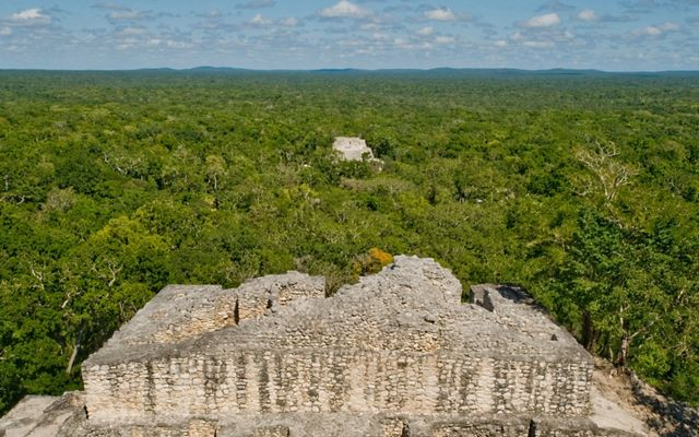 Aerial View of Maya Forest