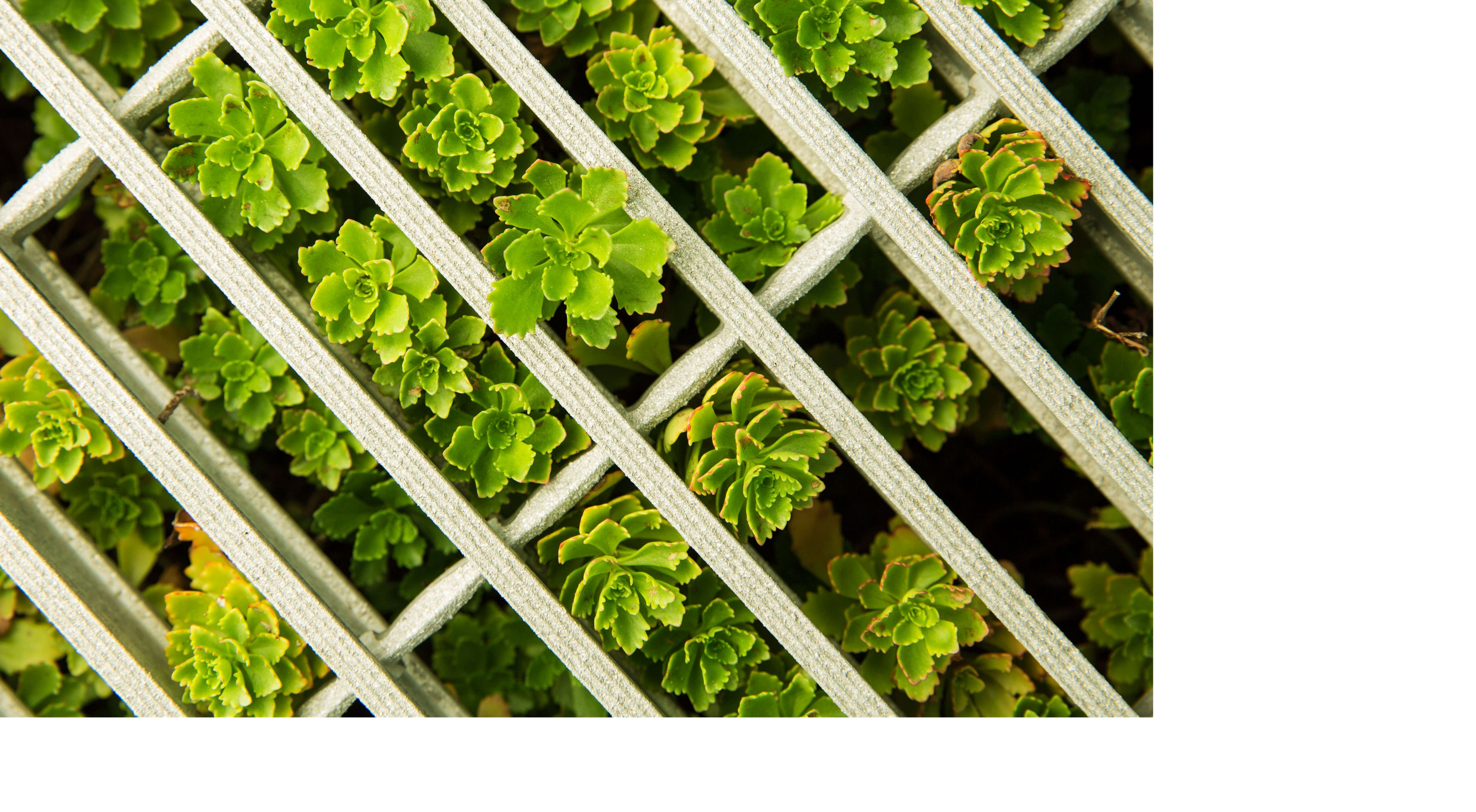 Photo from above of green plants growing in a white grid.