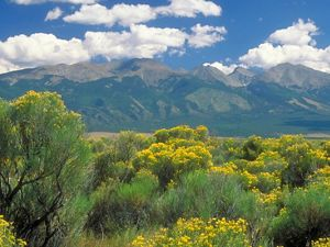 Dramatic, spring view of Medano Zapata ranch with flowering shrublands at the base of the Sangre de Cristo mountains, Colorado.