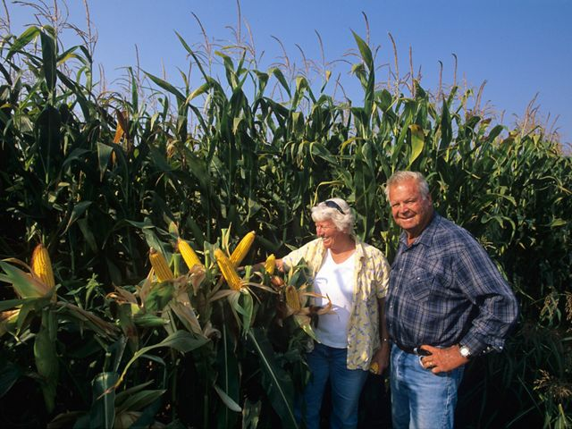 Jim & Sally Shanks in corn fields on Staten Island, CA.