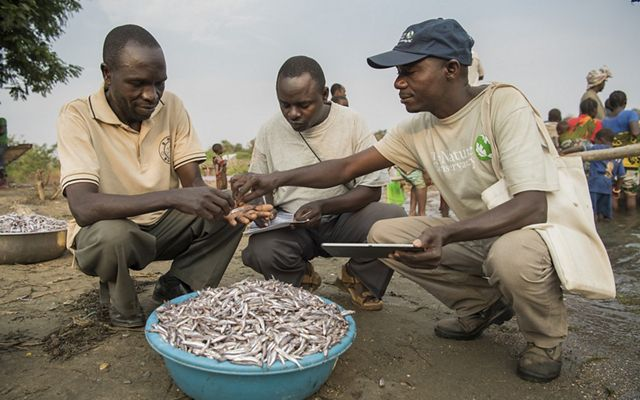 The Nature Conservancy's Peter Limbu, James Anton, and Sadoki Nfukamo measure fish for the Buhingu Beach Management Unit (BMU) on the shoreline of Lake Tanganyika in western Tanzania. James and Sadoki are part of a volunteer data collection team monitoring the type and size of fish being caught on the lake.