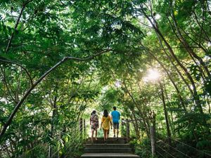 Three people walk up stairs under a canopy of trees.
