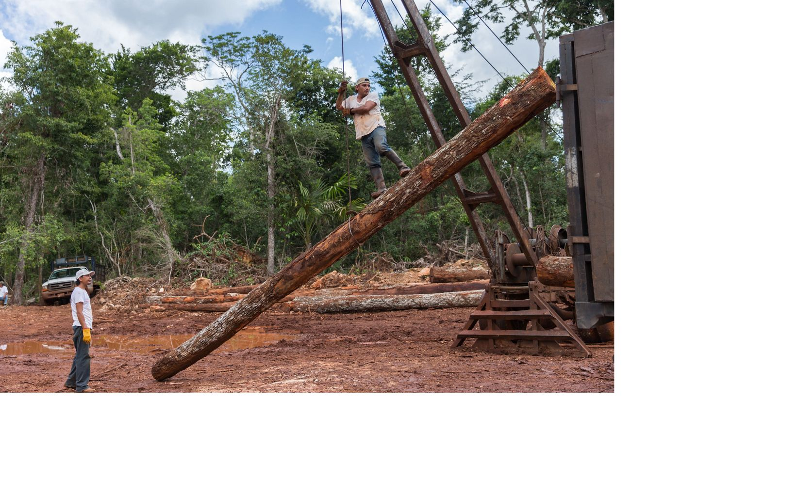 Leonardo Reyes Peregrino loads Chico Zapote logs onto a truck with a crane in a clearing in the tropical forest around Noh Bec, Quintana Roo.