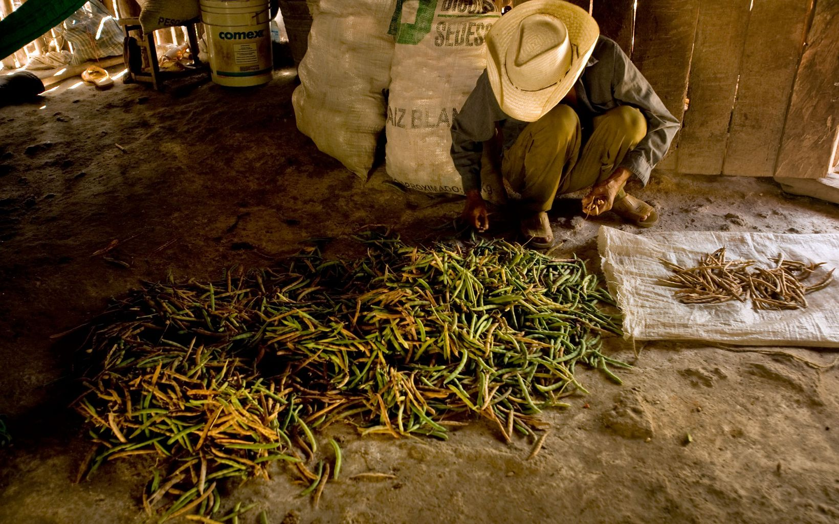 sorts beans in a hut.