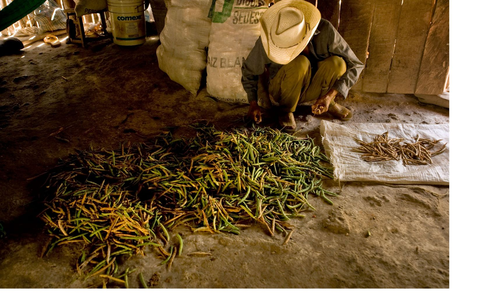 An indigenous man sorts beans in a hut at the ejido Veinte de Noviembre situated in the lush Maya Forest of Mexico's Yucatan Peninsula.  An ejido is a self-governing land cooperative unique to Mexico.
