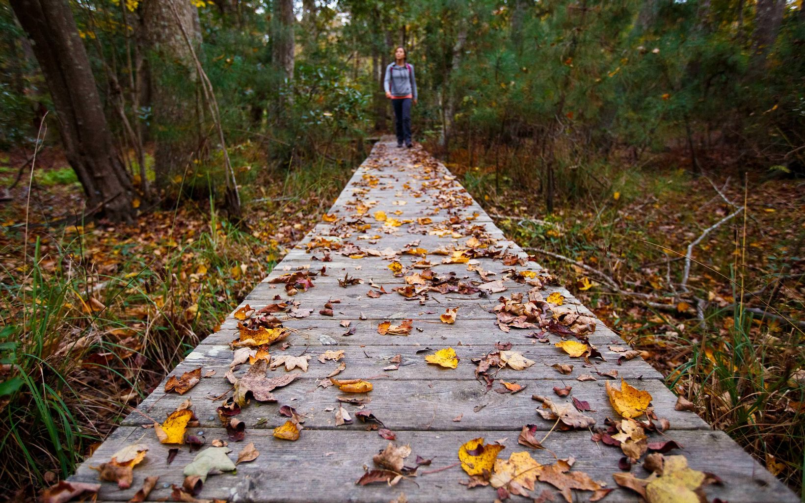 A hiker walks towards the camera along a boardwalk covered in yellow and brown leaves.
