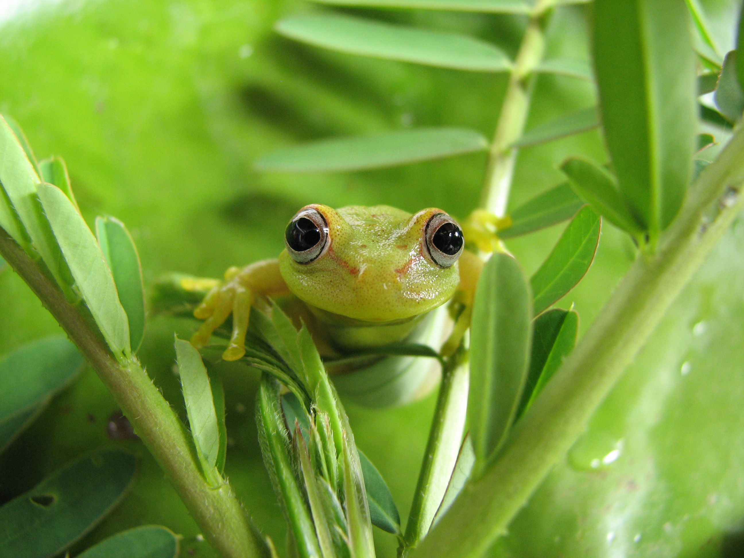 a close up shot of a green frog hanging on greenery