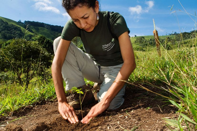 Claudia Picone, a staff member with The Nature Conservancy, plants seedlings in the Extrema municipality of Brazil.