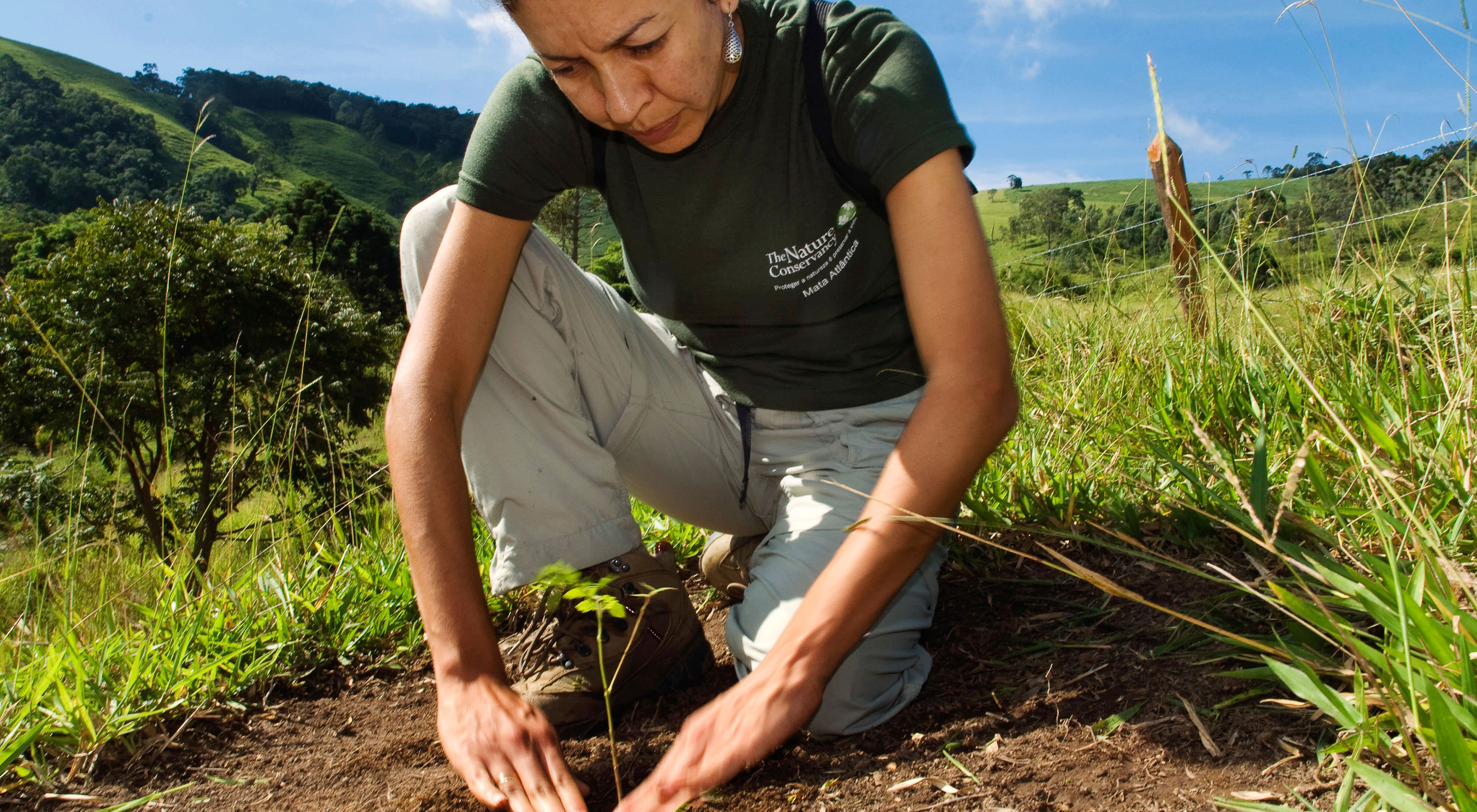 Claudia Picone, a staff member with The Nature Conservancy, plants seedlings in the Extrema municipality of Brazil. The Nature ConservancyÕs Atlantic Forest program began a Water Producer Program to compensate landowners who protect and reforest