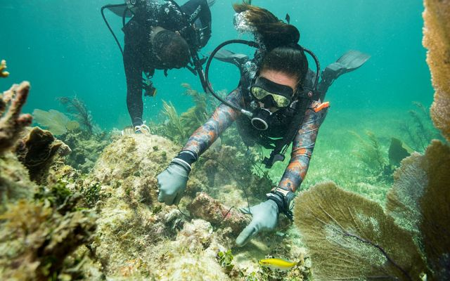 two scuba divers holding string are repairing a broken piece of coral