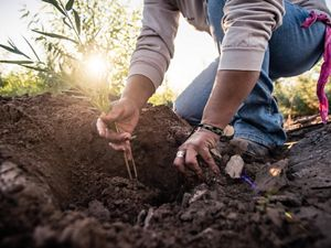 a woman digs into soil to plant a seedling