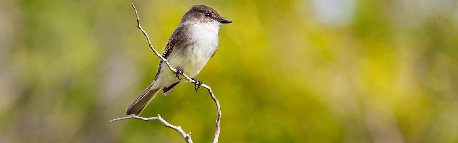 A songbird perched on a branch against a blurred green background