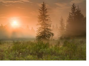 Sunrise over wetlands and spruce and hemlock trees in West Virginia.