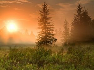 An orange sunrise viewed through mist over a forested landscape.