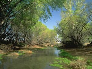 The San Pedro River southeast of Phoenix, Arizona.