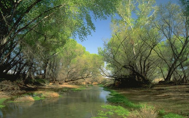 View of the verdant San Pedro River in Arizona.