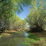 A river flows below arching trees near downtown Phoenix.