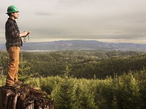 A man in green hard hat and brown plaid shirt stands on a tree stump surveying a forest