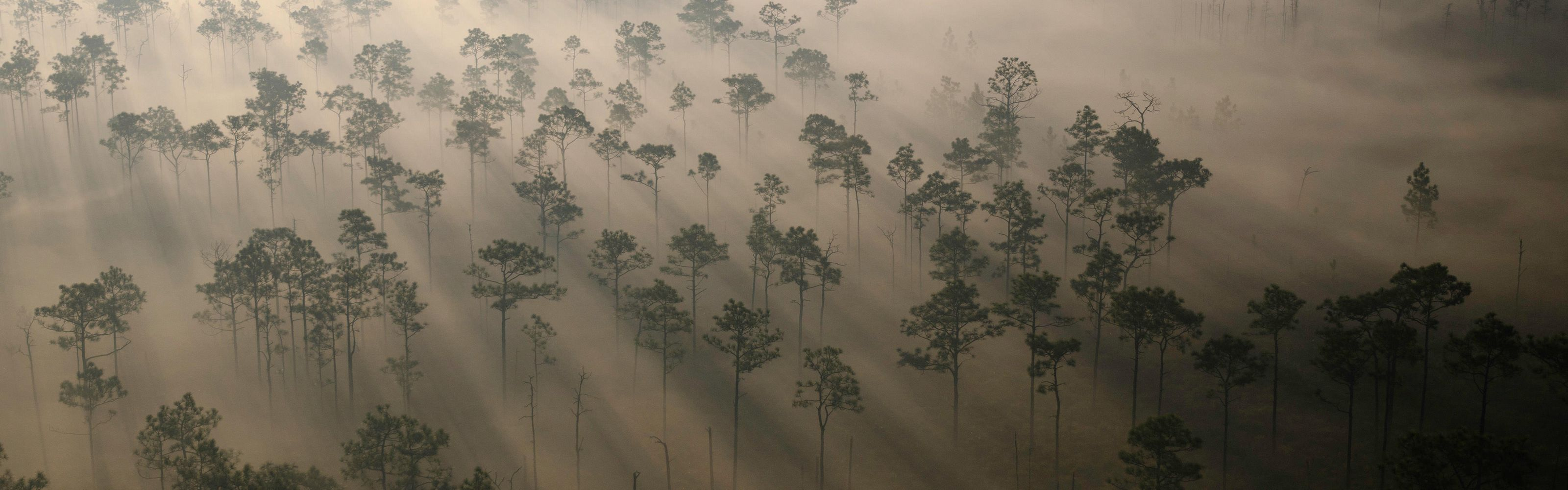 Aerial view of the Conservancy's 12,000-acre Disney Wilderness Preserve in Florida.
