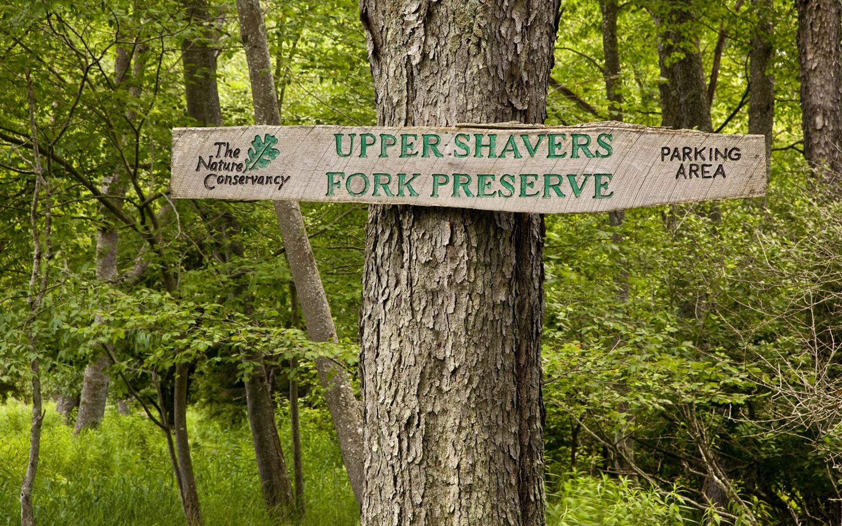 The Upper Shavers Fork Preserve on Cheat Mountain.