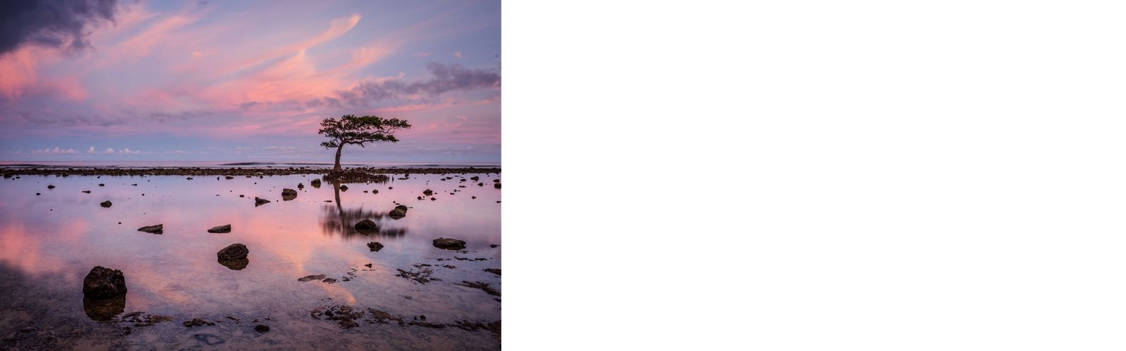 A lone mangrove tree silhouetted against the pastel colors of an evening sky interru the horizon on the inner reef near the village of Utwe on Kosrae island, Micronesia.