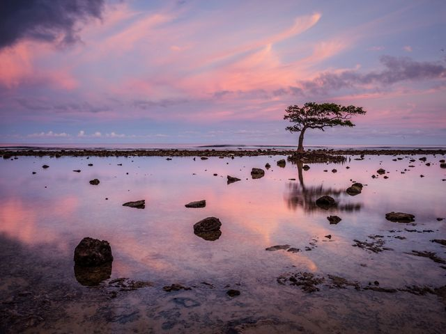 A purple sunset is relected in a calm sea with one tree in silhouette.