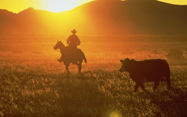 rancher on horse at sunset