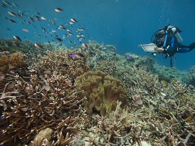Andreas Muljadi, a member of TNC's staff, monitoring coral reefs in ocean waters off Kofiau island in the Coral Triangle.