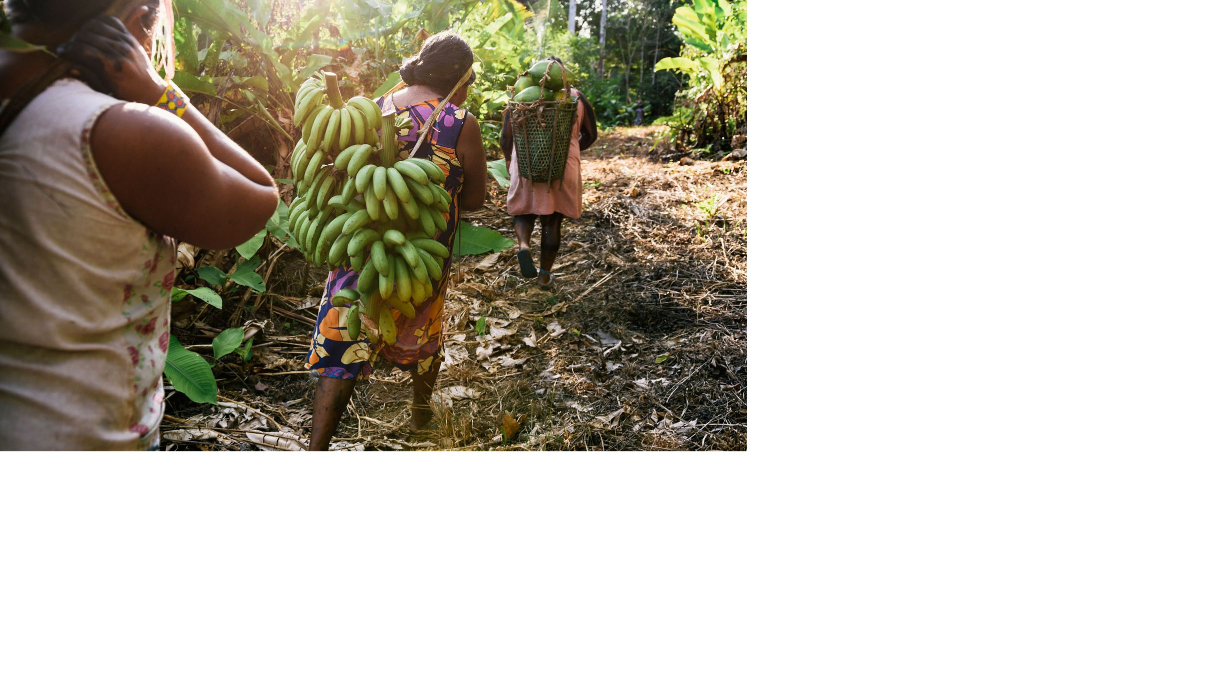 Xikrin women gather bananas and papayas.